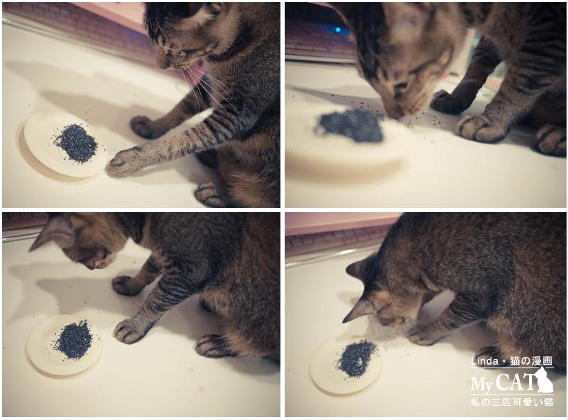 貓碳-10.jpg