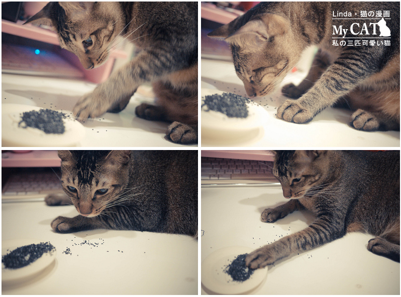 貓碳-11.jpg