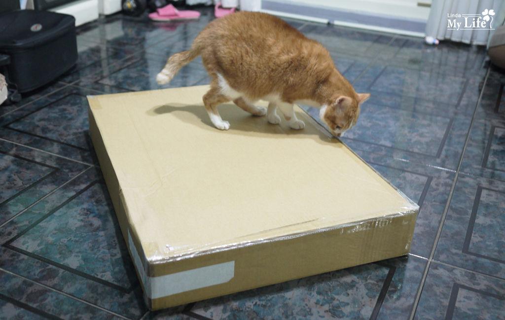 貓窩貓籃子-1.jpg