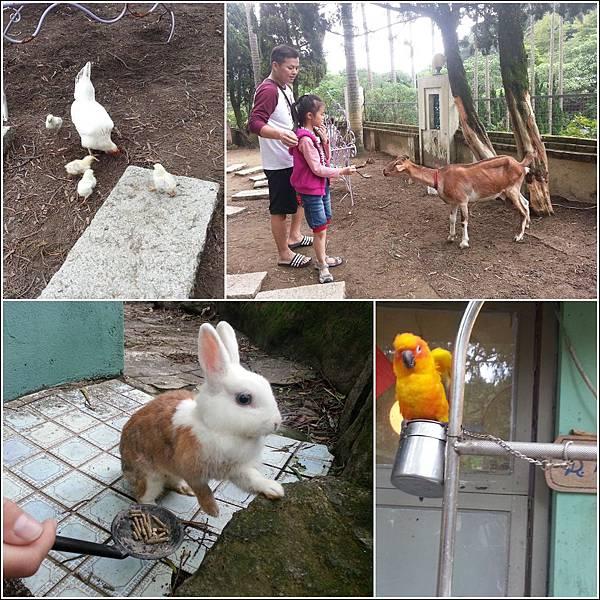 2014/10/12 內雙溪兔子餐廳11