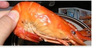 蝦子.png