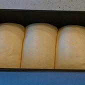 北海道牛奶吐司最後發酵7分滿
