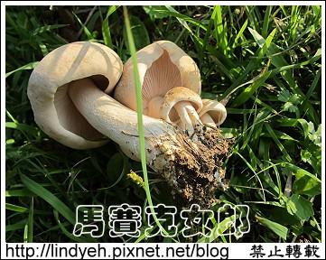 giant_05.jpg