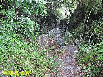 trail_03.jpg