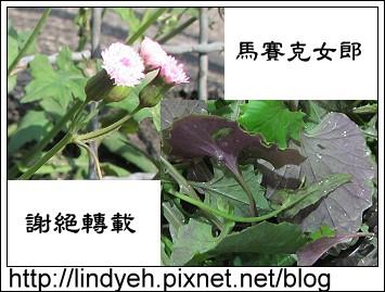purple_02.jpg