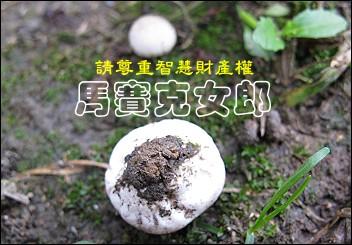 ball_03.jpg