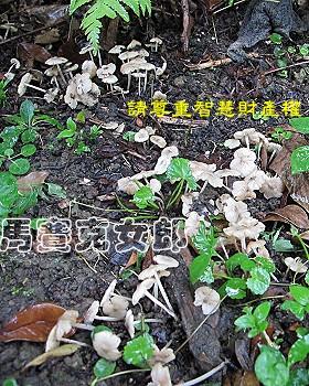 ant_05.jpg