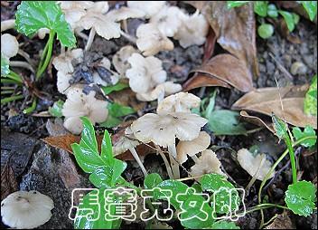 ant_03.jpg