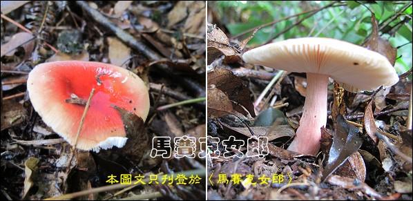 Wu_24.jpg