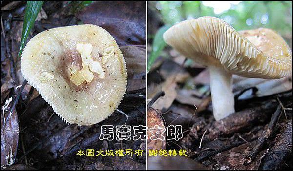 Wu_33.jpg
