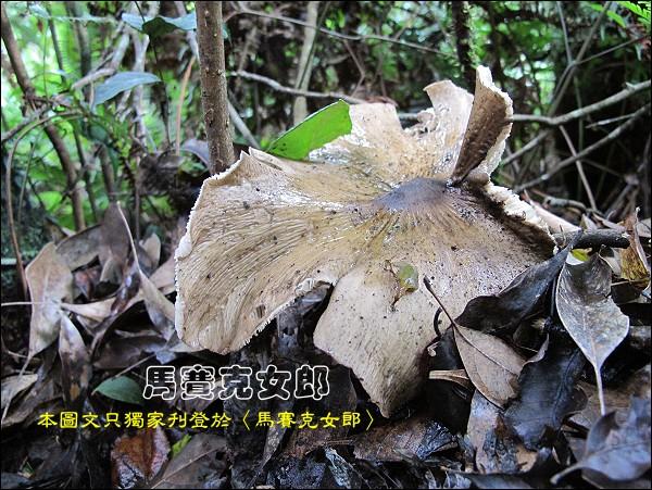 Wu_32.jpg