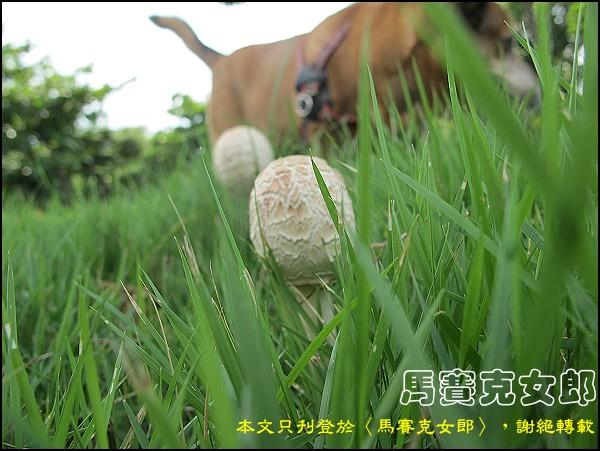 dog_01.jpg