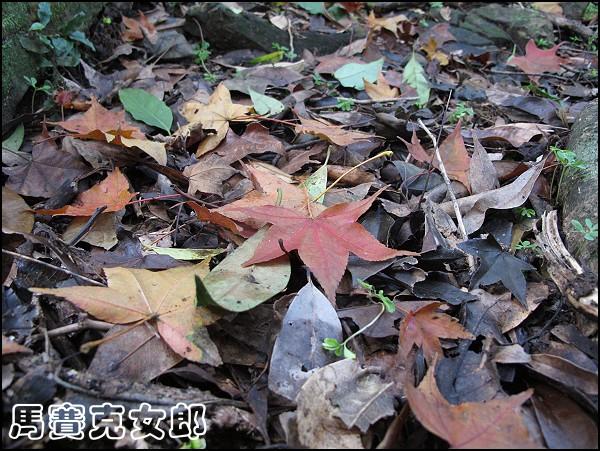 hi_19.jpg