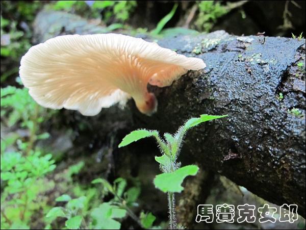 2012-04-29 巴福 045