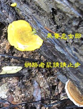 trail_14.jpg