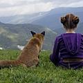 fox_02.jpg