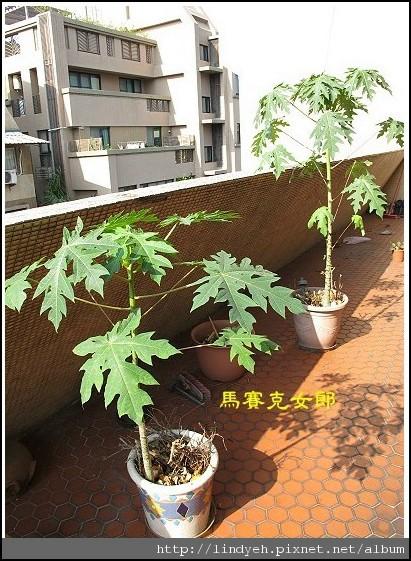 farm_11.jpg