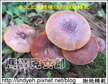 toad_03.jpg