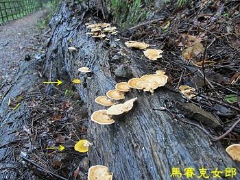 trail_08.jpg
