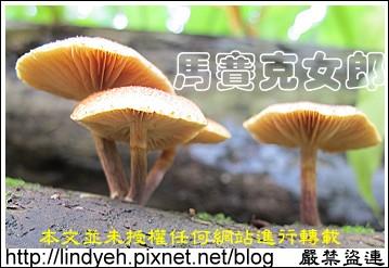 toad_02.jpg