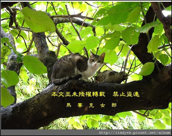 taan_park_01.jpg