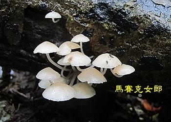 trail_13.jpg