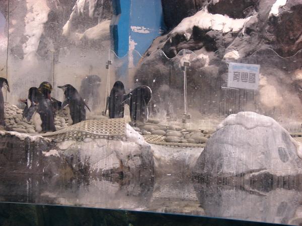 海洋企鵝館97.11.12 (29).JPG