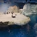 海洋企鵝館97.11.12 (3).JPG