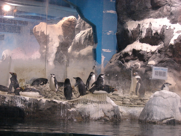 海洋企鵝館97.11.12 (14).JPG