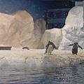 海洋企鵝館97.11.12 (15).JPG