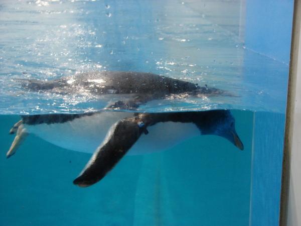 海洋企鵝館97.11.12 (16).JPG