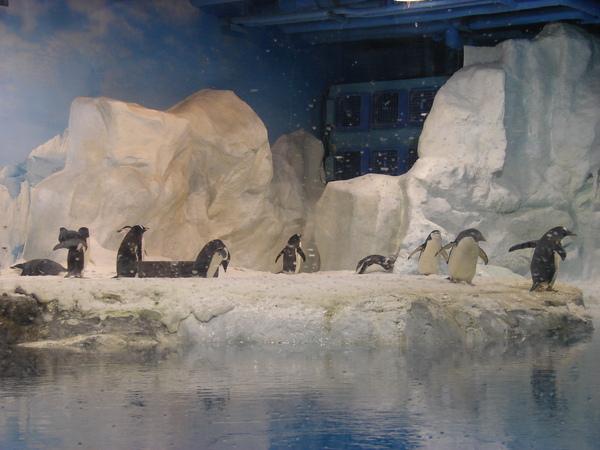 海洋企鵝館97.11.12 (25).JPG