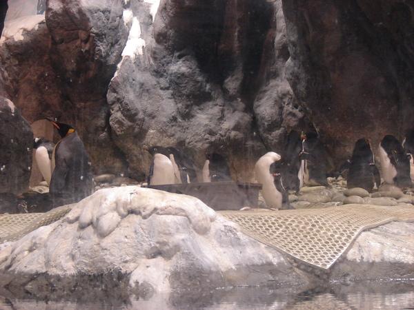 海洋企鵝館97.11.12 (26).JPG