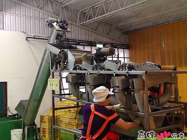 金桔農莊觀光工廠-ㄌㄟ金桔篇