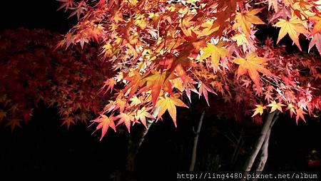 2016-11京都_171104_0015.jpg