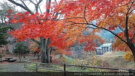 2016-11京都_171104_0031.jpg