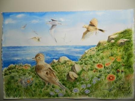 澎湖印象─ 小雲雀