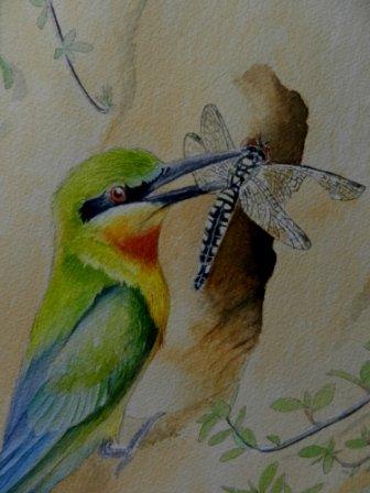 金門的夏日精靈─栗喉蜂虎  水彩畫 Arches 水彩紙 56cm x 38cm