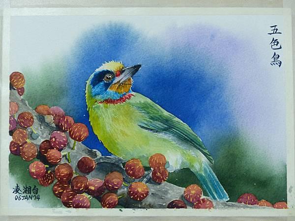 宏南鳥餐廳的食客─五色鳥 水彩畫 Arches 水彩紙 26cmx18cm