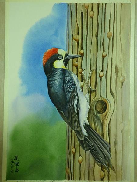 勤奮的儲藏家─北美橡實啄木鳥 水彩畫 Arches 水彩紙 38cmx26cm