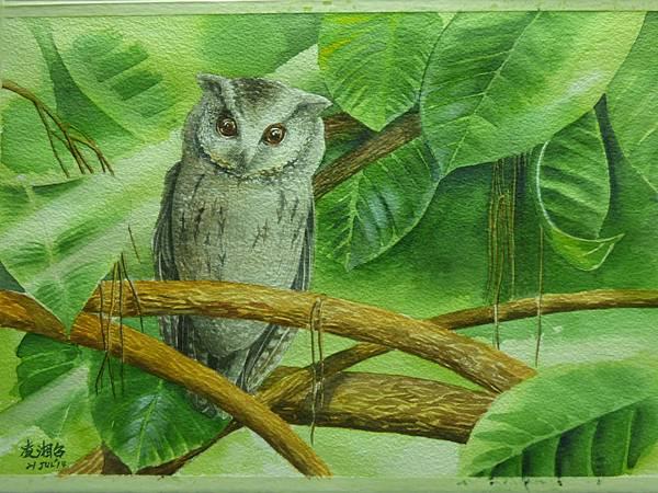 鬧市裡的隱者─領角鴞 水彩畫 Arhces 水彩紙 38cmx26cm