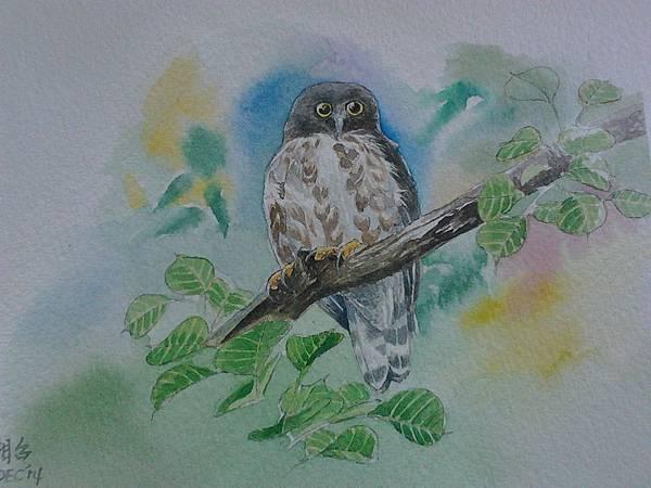 褐鷹鴞--水彩畫卡片 20cmx14.4cm