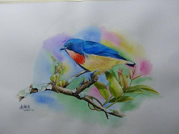 歡樂的小不點─紅胸啄花 水彩畫 Arches 水彩紙 56cmx38cm