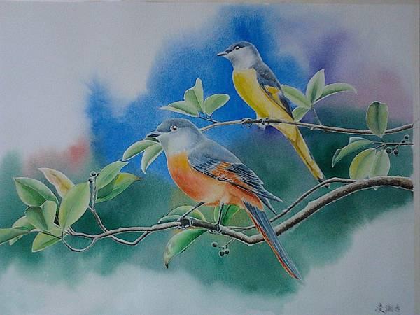 灰喉山椒鳥--水彩畫 Arches 水彩紙 56cmx38cm