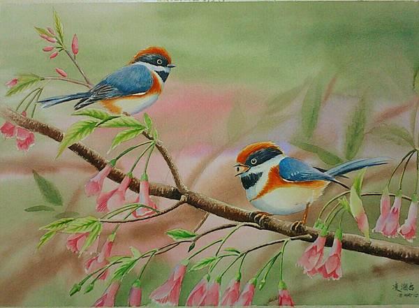 歡樂的小叮噹--紅頭山雀 水彩畫 Arches 水彩紙 56cmx38cm