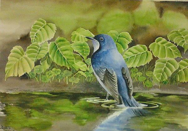 藍歌鴝 水彩畫 Arches 水彩紙 56cmx38cm