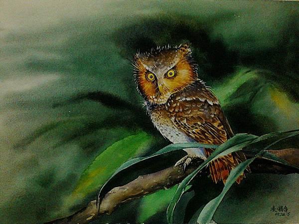 黃嘴角鴞 水彩畫 Arches 水彩紙 36.5cmx26.5cm