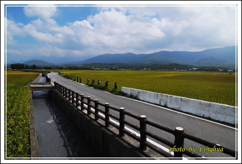 2013台東米鄉(18).JPG