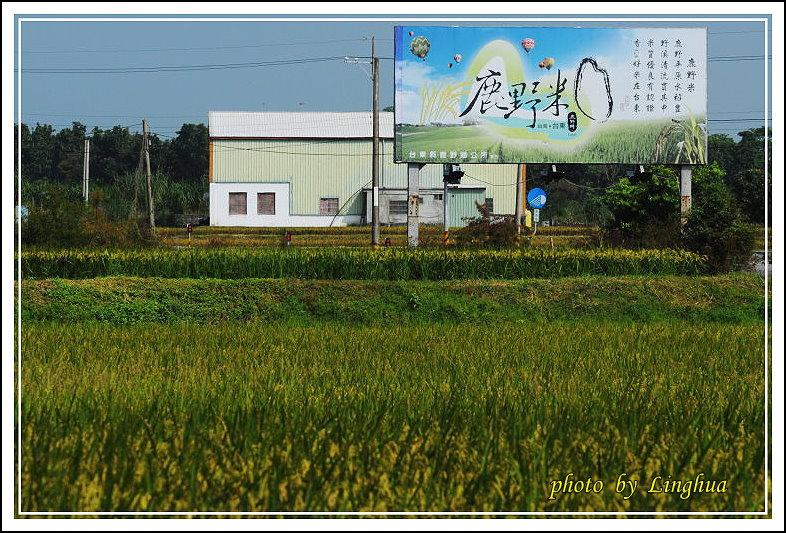 2013台東米鄉(2).JPG