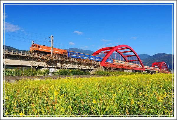 2014客城鐵橋油菜花(9).jpg